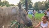 Třídenní Lodenica úspěšně zakončila festivalové léto (9 / 26)