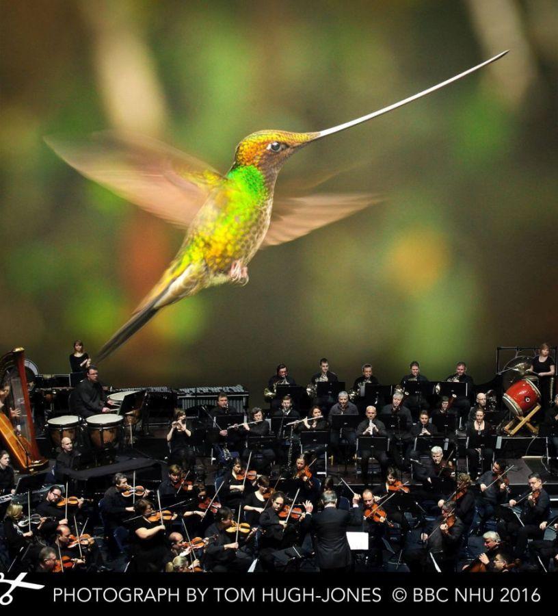 Osmdesátičlenná Filharmonie hl. m. Prahy pod …