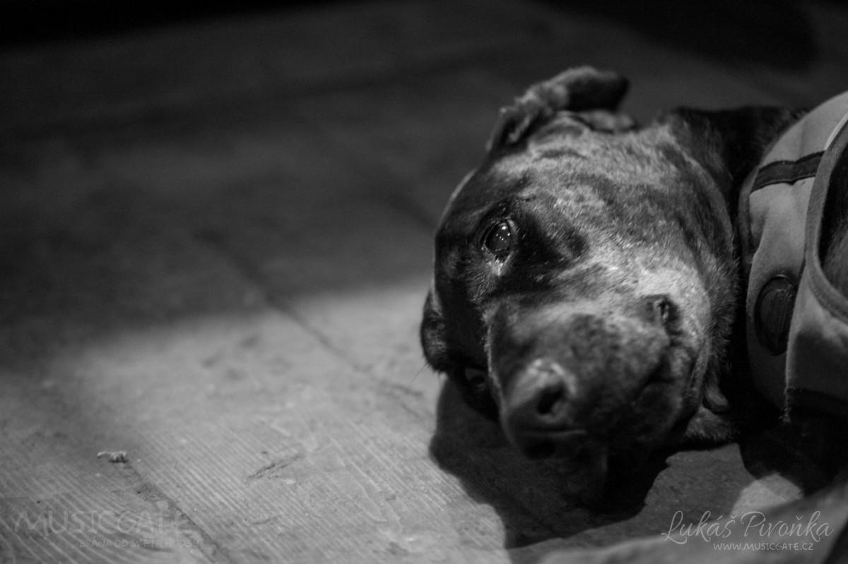 Punkáči podpořili Libeňský psí útulek v Praze
