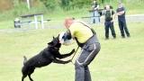 Výcvik psů (92 / 194)