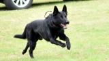 Výcvik psů (95 / 194)